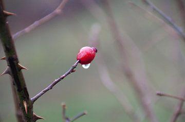rode bes van Aad van der linden