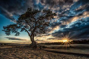 Baum-Sonnenuntergang von Robin van Maanen