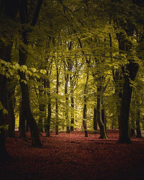 Trees and leaves van Sandra H6 Fotografie