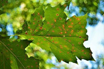 De Herfst komt er aan... van DoDiLa Foto's
