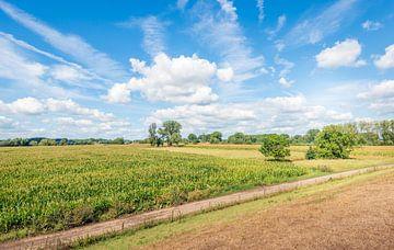Kleurig Nederlands landschap in de zomer van Ruud Morijn