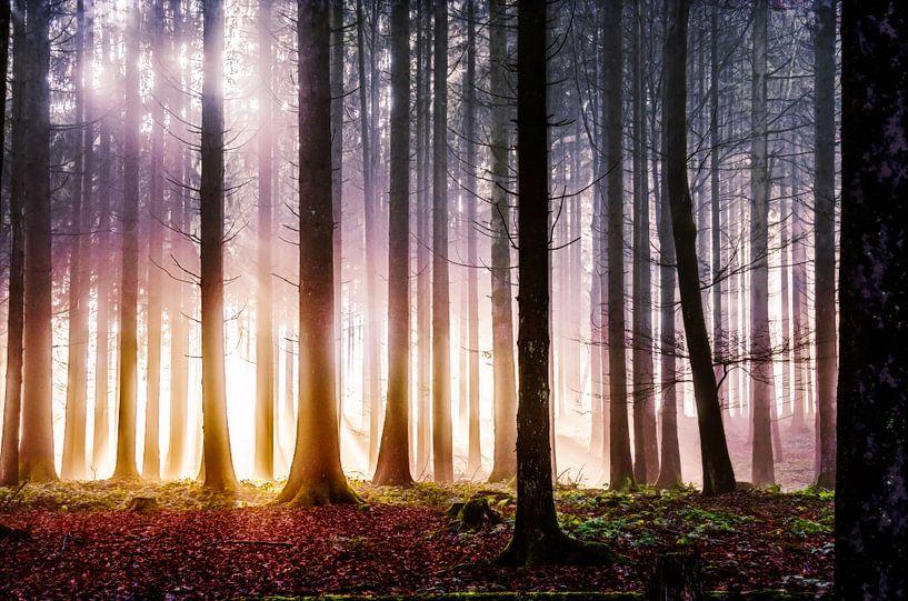 Wald im strahlenden Licht von Nicc Koch