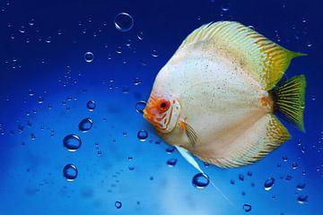 Unterwasserwelt sur Heike Hultsch