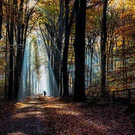 Fietsen in het bos van Bart Verbrugge