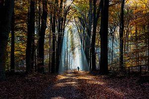 Fietsen in het bos van