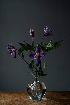Lila Blume in Glasvase gegen dunklen Hintergrund von Jenneke Boeijink