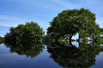 2 Bäume Spiegelung van Edgar Schermaul
