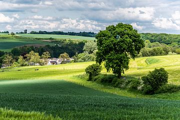 Limburgs landschap van Herman Coumans