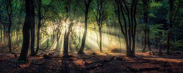Panorama eines berühmten niederländischen Waldes bei Sonnenaufgang von Martin Podt