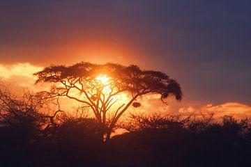Afrikaanse Zonsondergang van Cinthia Mulders