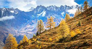 Mountainbikers in Zwitserland van Bas Koster