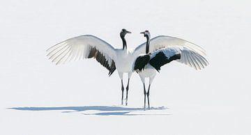 Japanse Kraanvogels III van Harry Eggens