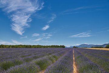 Lavendelveld Valensole Frankrijk van Ad Jekel