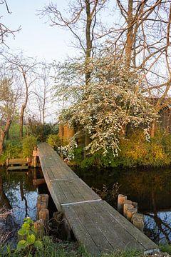 Lentekleuren in de polder (2)