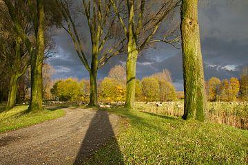 Donkere wolken boven de Biesbosch von