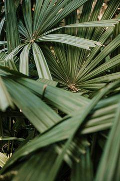 Palmbladeren van dichtbij
