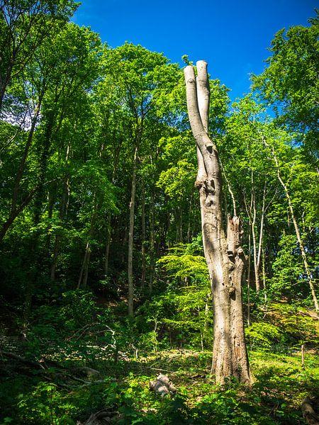 Alter Baum in der Natur von Martijn Tilroe