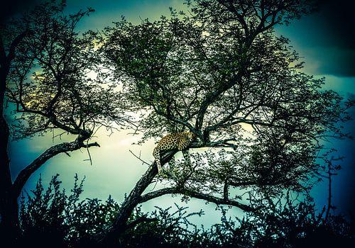 Luipaard in magische boom