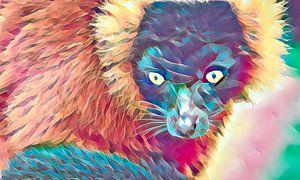 Lemur, farbenfroher Look