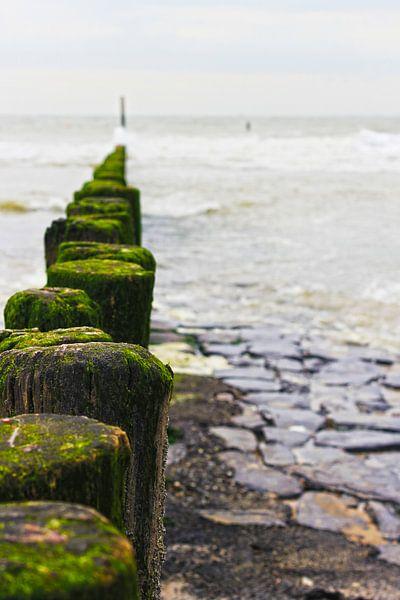 mossige strandpalen in zeeland van Peter van Mierlo