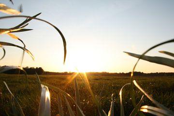 Eine schöne Wiese mit einer schönen Sonne von Christian Van Ettekoven