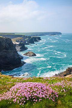 Frühling an Cornwalls Küste von Silvio Schoisswohl