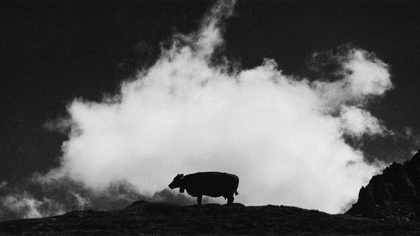 cow and cloud van Dorit Fuhg