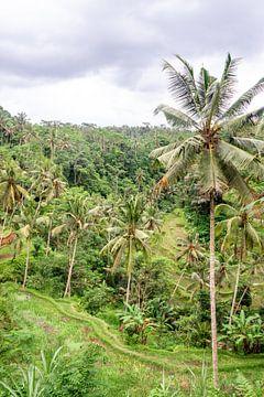 Ansicht der Reisterrassen von Mickéle Godderis