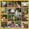 Collage van katten in allerlei situaties van Gert van Santen thumbnail