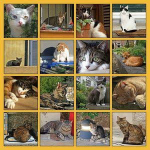 Collage van katten in allerlei situaties
