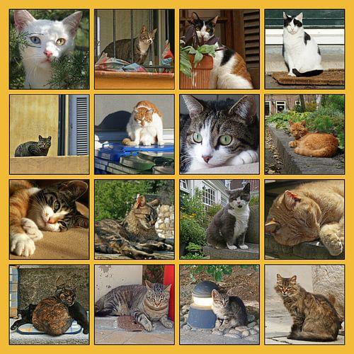 Collage van katten in allerlei situaties van