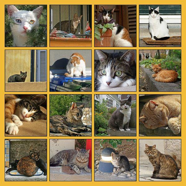 Collage van katten in allerlei situaties van Gert van Santen