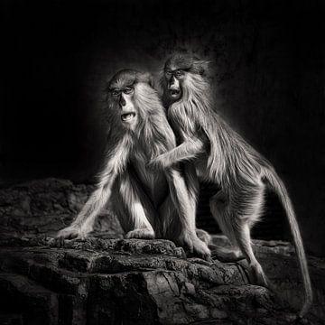 Zwei verängstigte Affen von Chihong