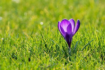 Komt de lente eraan? van Roel Ovinge