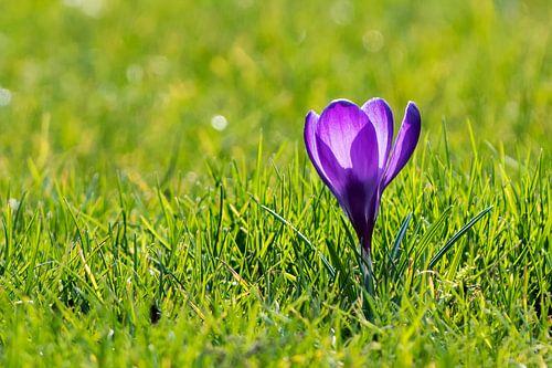 Venez ce printemps? sur