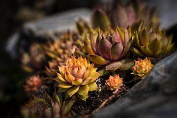 Vetplant van Rob Boon