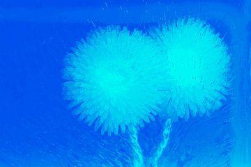 2 Bellis in het blauw van Marc Heiligenstein