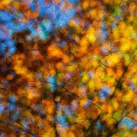 Autumn feeling van Ilya Korzelius