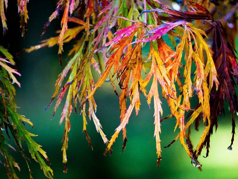 Herfstcarnaval - prachtig gekleurd blad van Dagmar Hopf