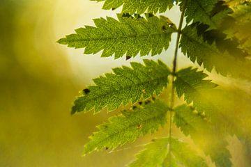 Close up getande bladeren von Marianne Rouwendal