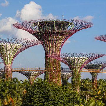 Supertrees, Gardens by the Bay, Singapur von Markus Lange