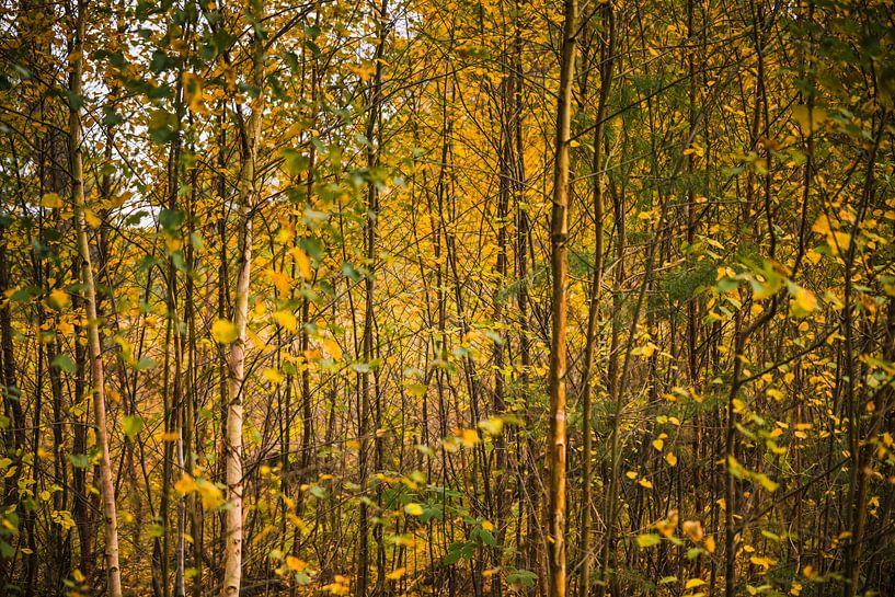 Het kleurige herfstige bos van Meint Brookman