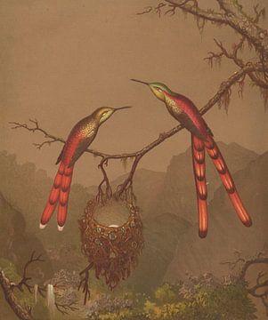 Brasilianische Kolibris I, Martin Johnson Heade