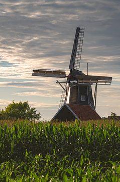 Mühle Bataaf in Winterswijk in der späten Nachmittagssonne hinter einem Maisfeld bei bewölktem Himme von Tonko Oosterink
