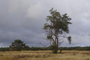 Landschap von Ad Steenbergen