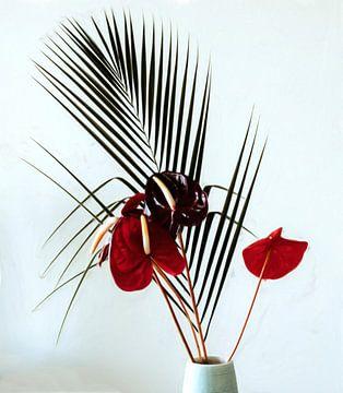 Stilleben rote Anthurie und Palmblatt von Maurice Dawson