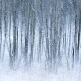 Abstract beeld van winter en mist van Sander Grefte