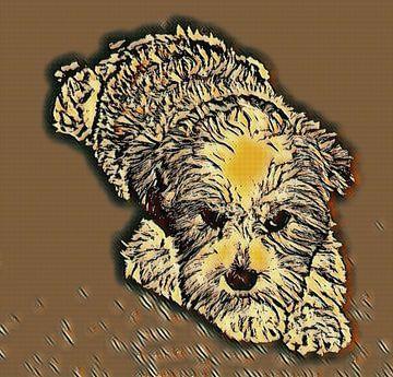 Jong hondje van Jose Lok