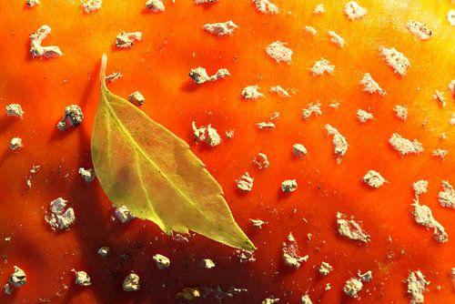 Herfstblad op vliegenzwam van Antwan Janssen