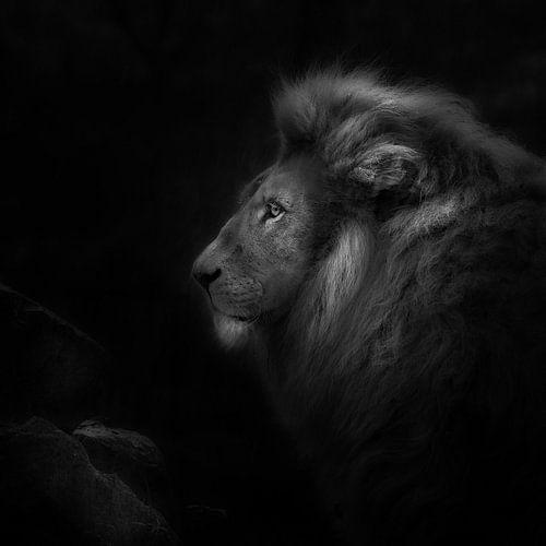 Royalty, portret van een leeuw van